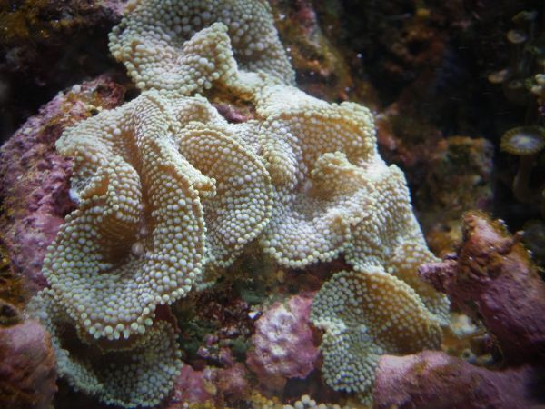josem5 - Foto - Coral: Coral