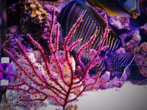 josem5 - Foto - Acuario, Coral: Acuario,coral