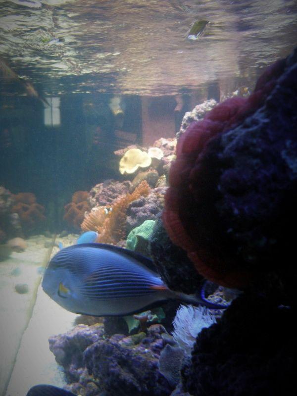 josem5 - Foto - Acuario Arrecife, Pez: Acuario Arrecife,pez